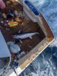 baja billfish