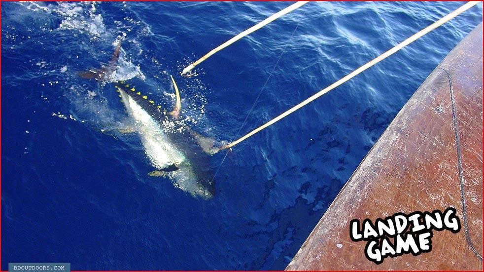 landing on fish