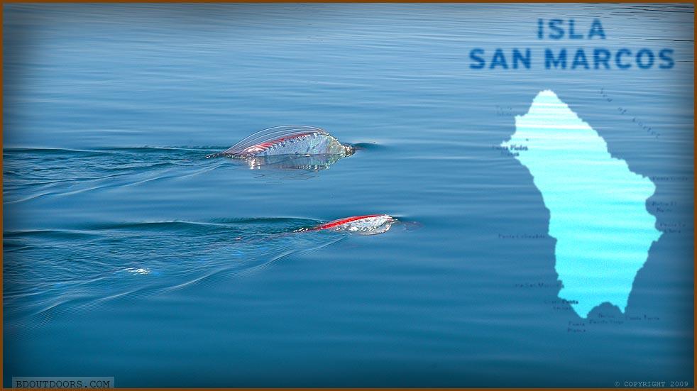 where do oarfish live