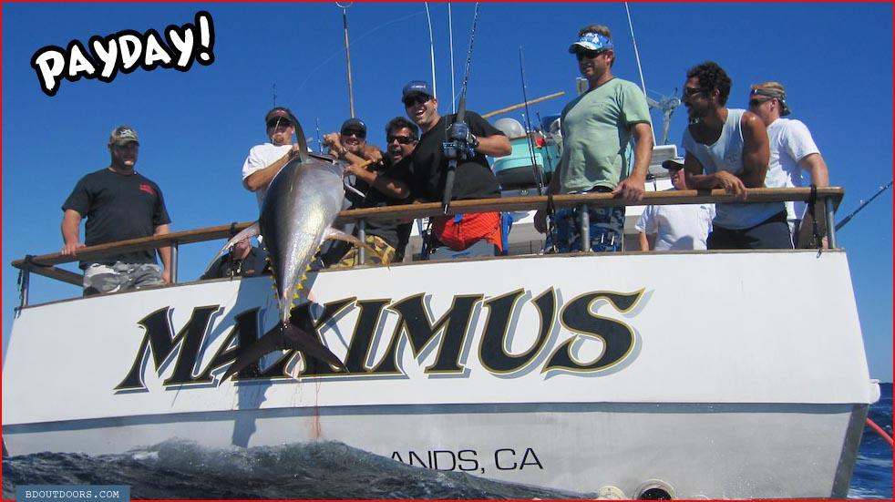 Big tuna catches